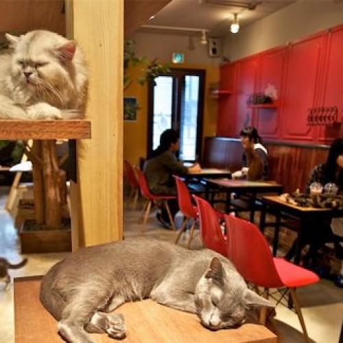 """Neko cafè, il bar dei gatti apre a Torino (della serie """"mai più senza"""")"""