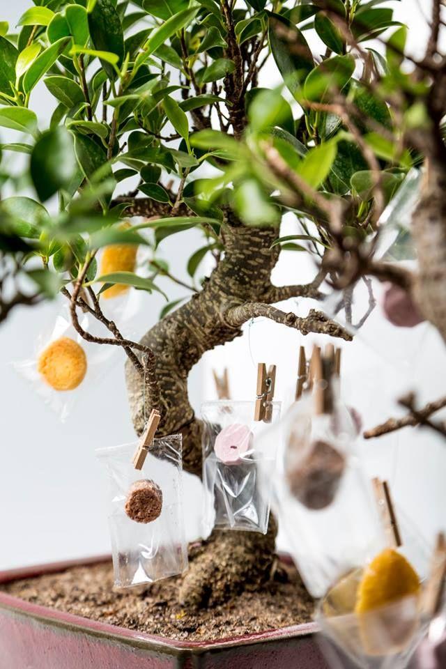 stazione di posta bonsai foto Andrea Di Lorenzo
