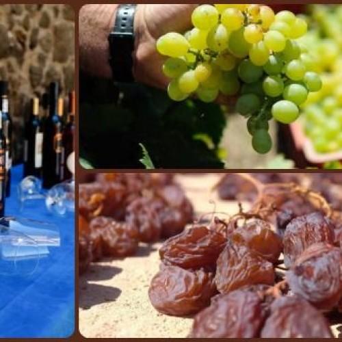 Passitaly 2014 a Pantelleria, vini passiti e degustazioni di qualità nell'isola siciliana