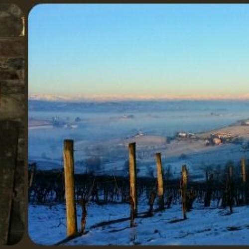 Vini, arriva il Nizza Docg: il top della produzione del Barbera del Piemonte