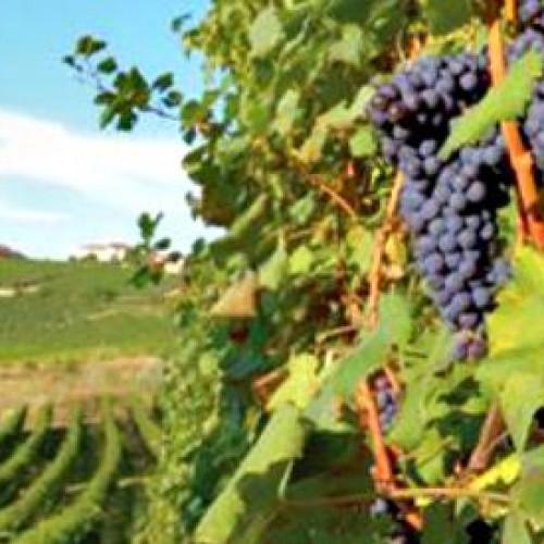 Il Barolo delle Grandi Langhe Docg, ad Alba l'evento cult sul re dei vini piemontesi