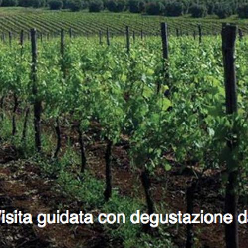 Wine tour a Cori / Visita guidata con degustazione da Carpineti