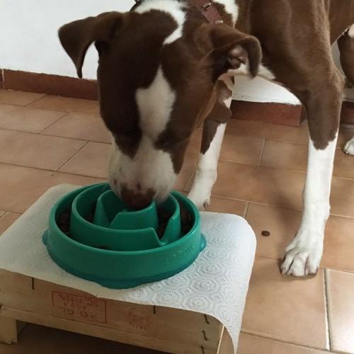 Qibo Roma, il primo negozio con laboratorio di cucina per cani e gatti