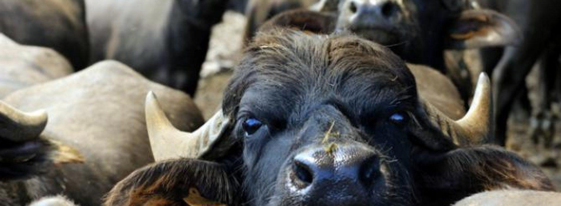 Tritacarne, Giulia Innocenzi ci convincerà ad abbandonare la carne? (e il prosciutto di Parma?)