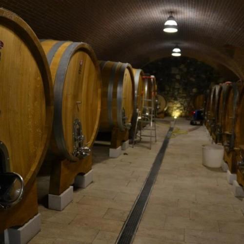 Vini naturali e Puntarella su Repubblica