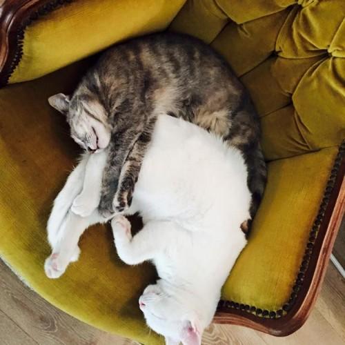 Romeow cat bistrot, a Ostiense ha aperto il locale con i gatti in libertà
