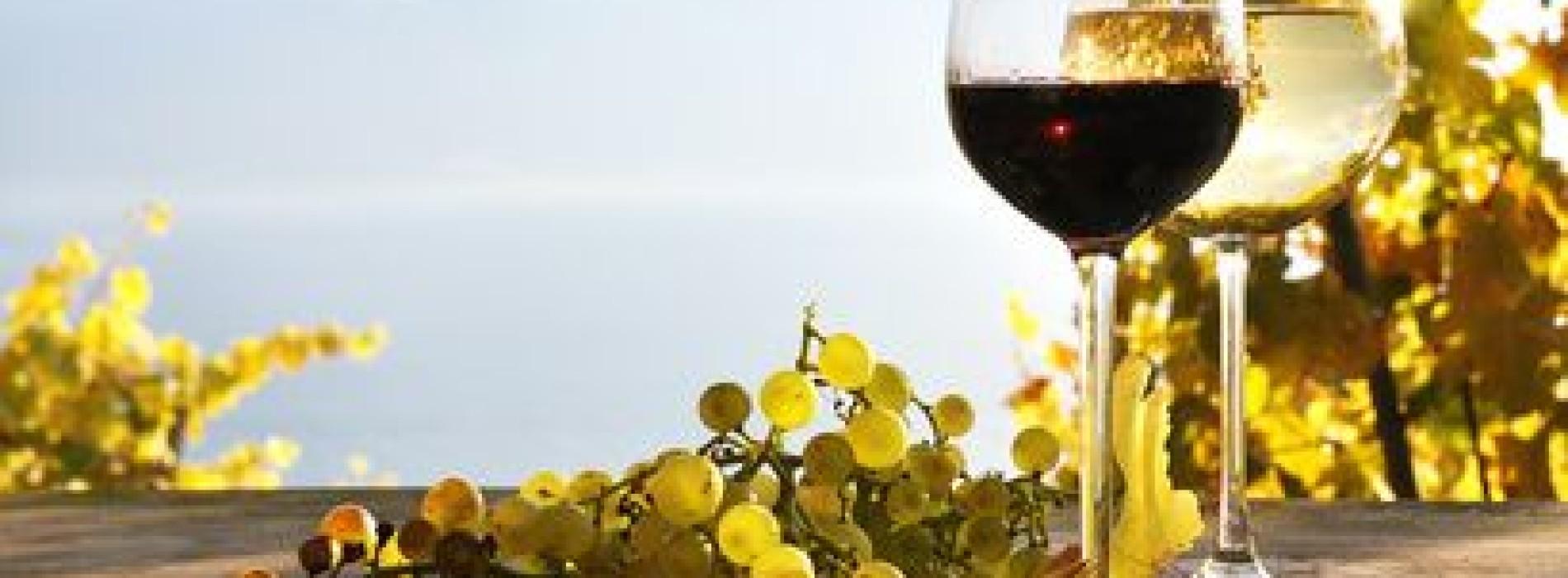 Al Vinitaly 2015 i vini biologici e naturali: seminari e degustazioni per conoscerli meglio