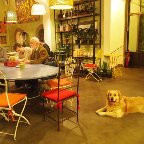 Locali per cani a Firenze, ristoranti e pub dog friendly