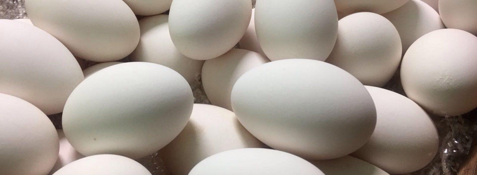 Eggs a Roma, storia di un'idea