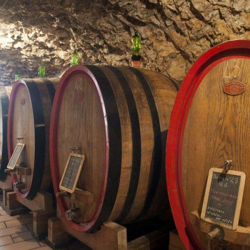 Montepulciano d'Abruzzo, il riscatto del vitigno di montagna e il vino bio della cantina Praesidium