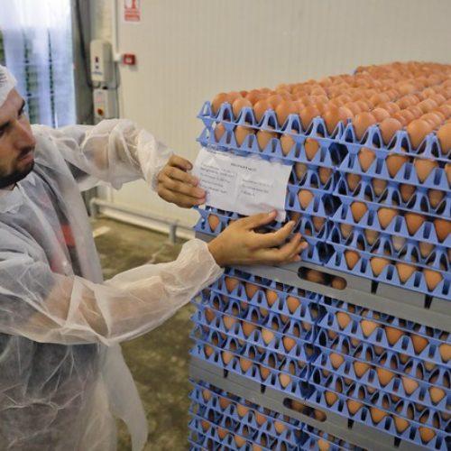 Uova al Fipronil in Italia, la trasparenza contro l'allarmismo