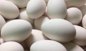 Le uova di Eggs Roma: biologiche, sostenibili, sicure