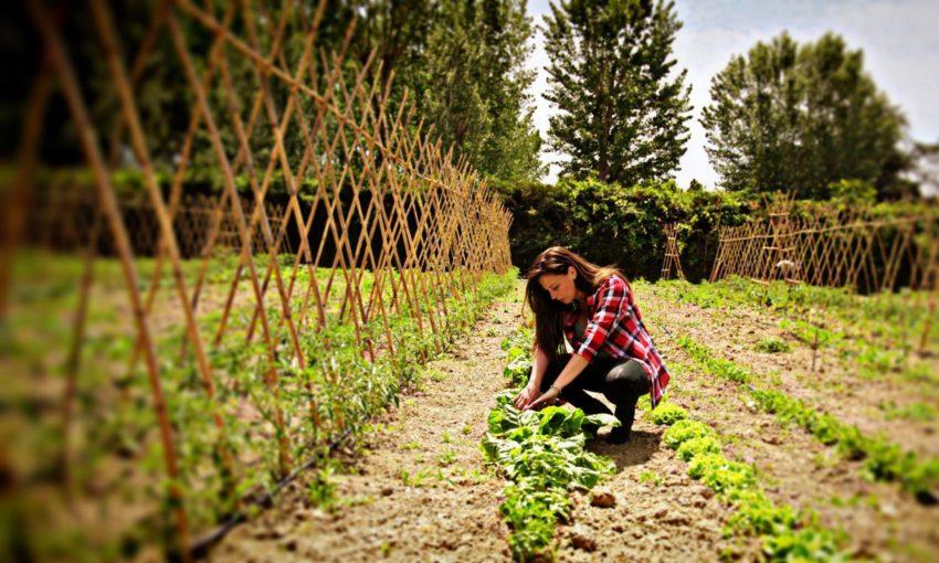 bio_farm_orto
