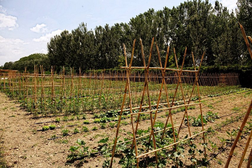 bio_farm_orto3
