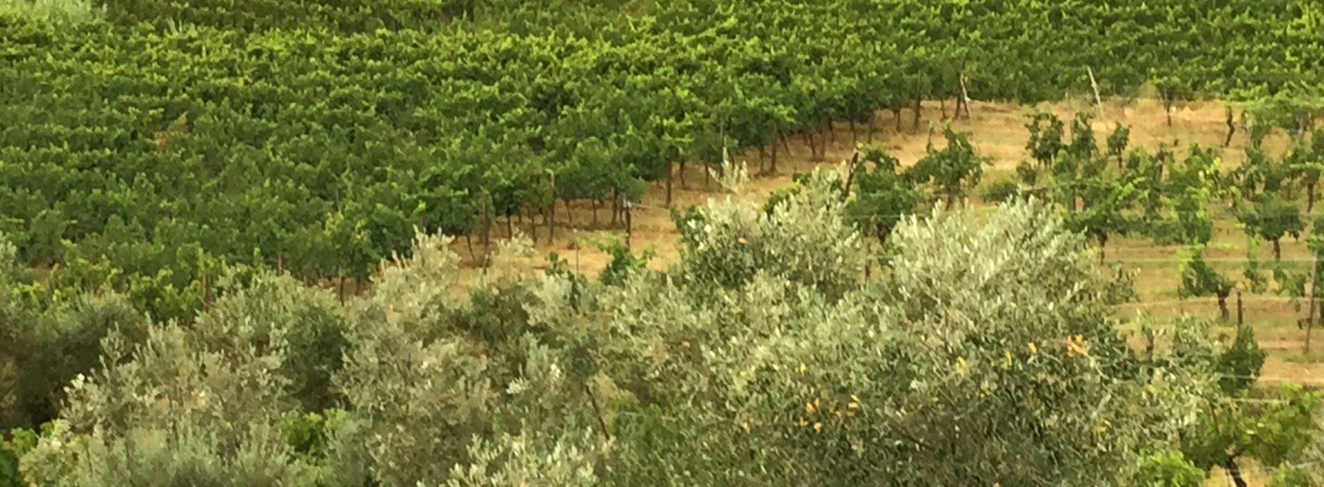 Fontesecca vini di Città della Pieve, canaiolo e sangiovese in purezza (naturale) dall'Umbria