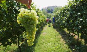 Prosecco e Tozzi, Slow Wine si indigna contro il geologo (e Trenitalia)