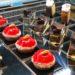 Hiromi Cake Roma, arriva la prima pasticceria giapponese (da non perdere i Mochi)