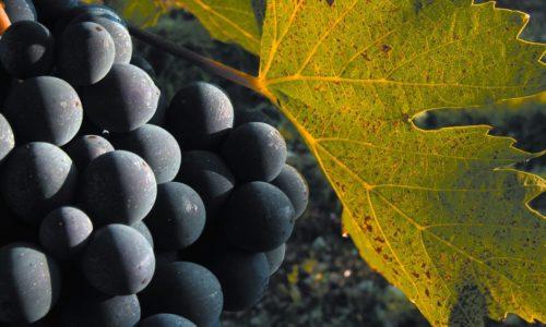 Negli agriturismi lombardi ora si possono bere solo vini lombardi: addio Sangiovese e Barolo