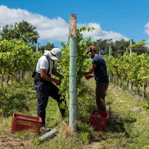 Uruguay e vino, per la Cnn è la nuova Toscana  con Bodega Garzon (grazie all'Oceano e un enologo italiano)