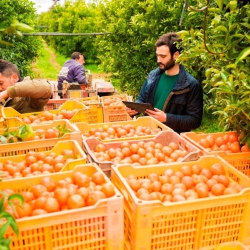 Biorfarm lancia Biormarket, frutta a domicilio dalla startup nata per adottare alberi