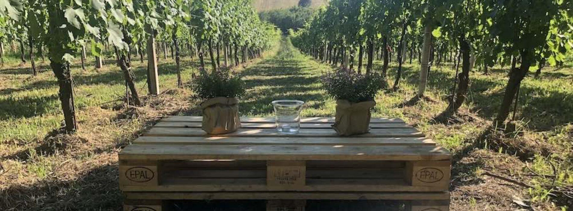 Aperitivo in vigna ai Castelli Romani: fuga bucolica tra i filari con vino locale e prodotti tipici