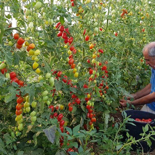 """La biodinamica secondo Noro: """"L'agricoltore è il primo responsabile della salute delle persone"""""""